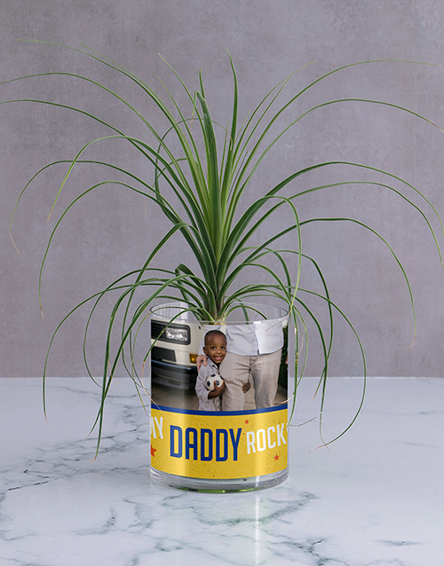 fathers-day: Personalised Daddy Rocks Ponytail Palm!