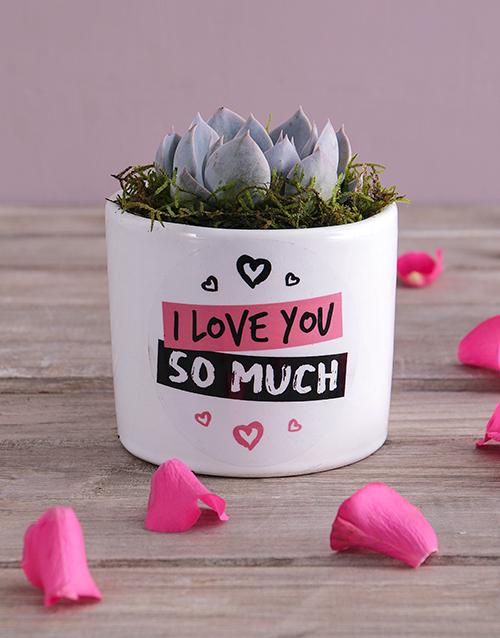 anniversary: Love You Succulent!