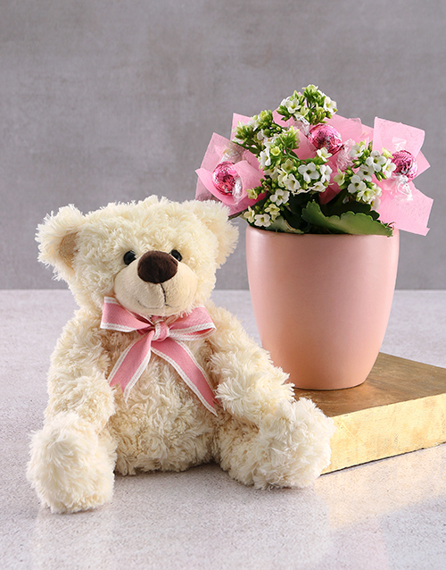 plants: Blooming Kalanchoe and Teddy!