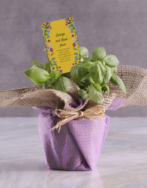 herbs: Basil Plant with Special Recipe !
