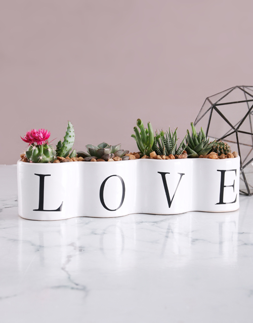 anniversary: Cacti and Succulents in Love Pot!