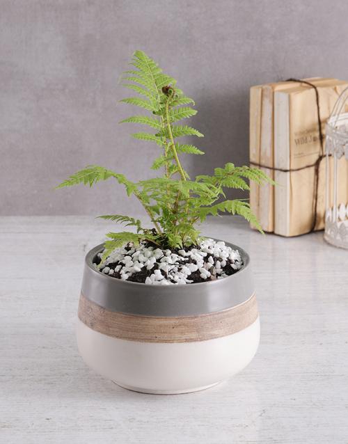 sympathy: Fern in Ceramic Pot!