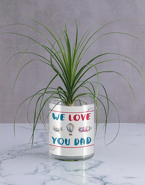 fathers-day: We Love Dad Ponytail Palm!