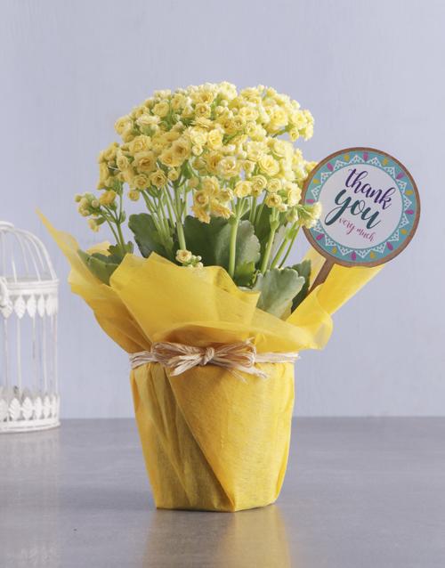 kalanchoe: Yellow Kalanchoe Gift Of Gratitude!