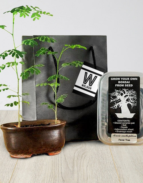 personalised: Grow Your Own Bonsai Vibrant Sensations!