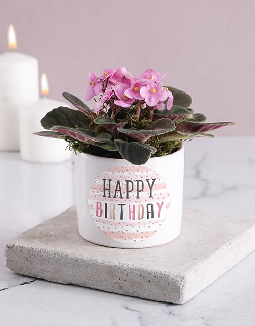 flowers: Happy Birthday African Violet Blooms!
