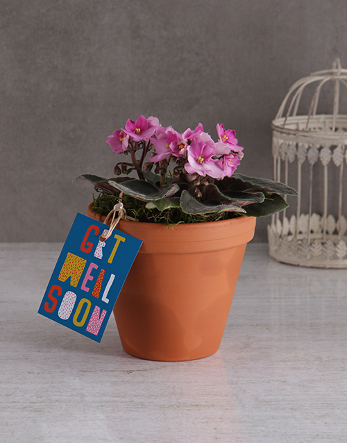 colour: Get Well African Violet!