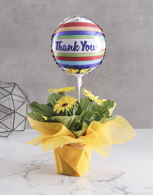 thank-you: Radiant Gerbera Blooms!