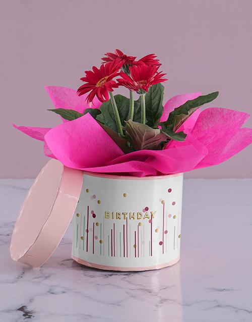 in-a-box: Happy Dotty Birthday Gerbera!