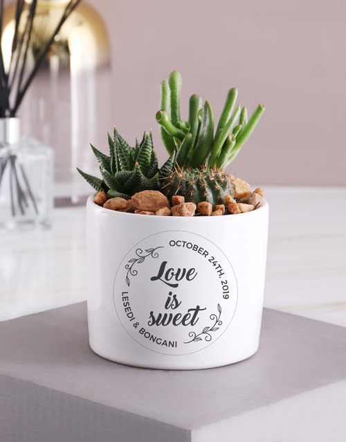 personalised: Personalised Love Is Sweet Succulent Mix!