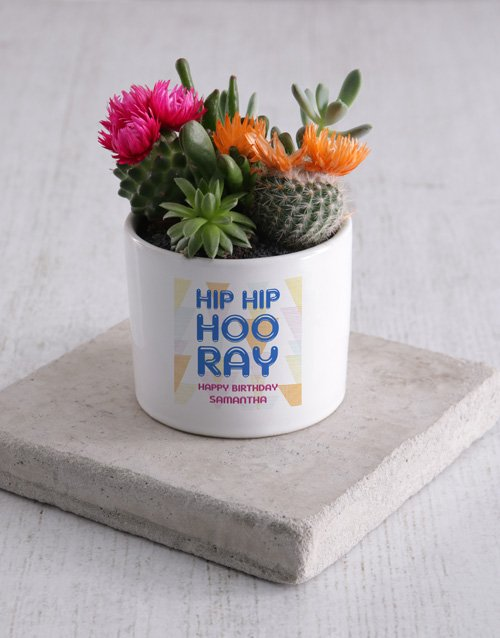 personalised: Personalised Birthday Succulent Mix!