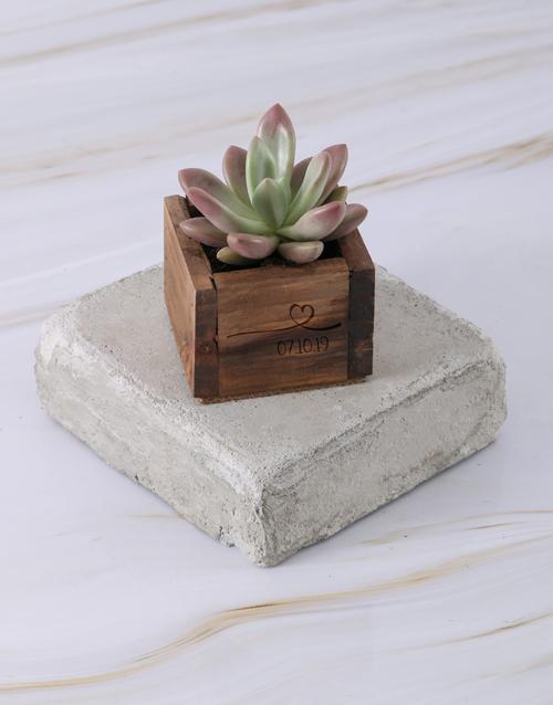 flowers: Personalised Special Day Succulent!