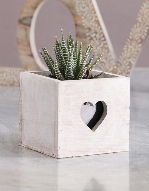 succulents: Succulent In Heart Cut Out Crate!