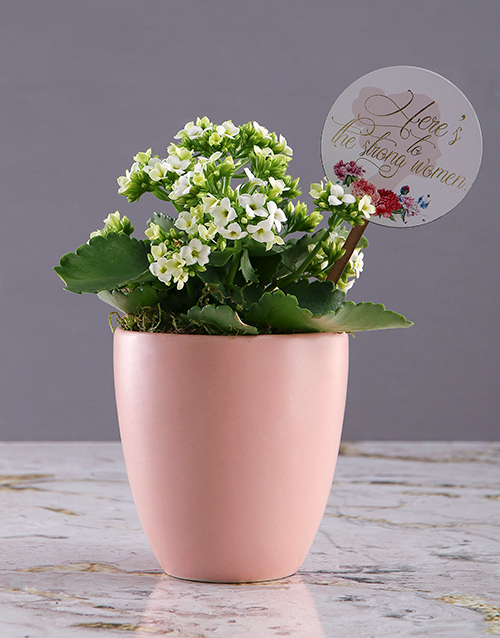 plants: Heres to Women Kalanchoe Plant!