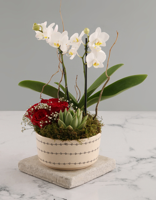 orchids: White Midi Orchid and Rock Rose Succulent!
