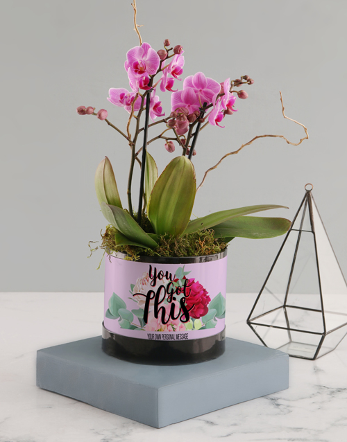 orchids: You Got This Pink Midi Orchid!