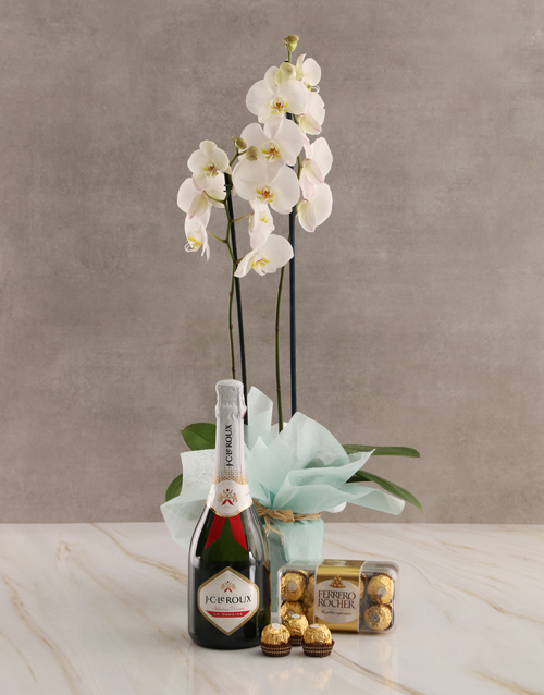 birthday: Bubbly Birthday Orchid Hamper!