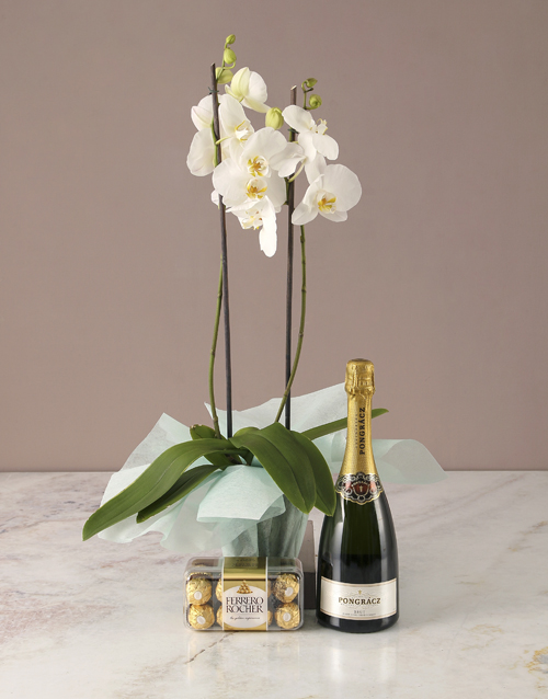 orchids: The Best White Orchid Hamper!
