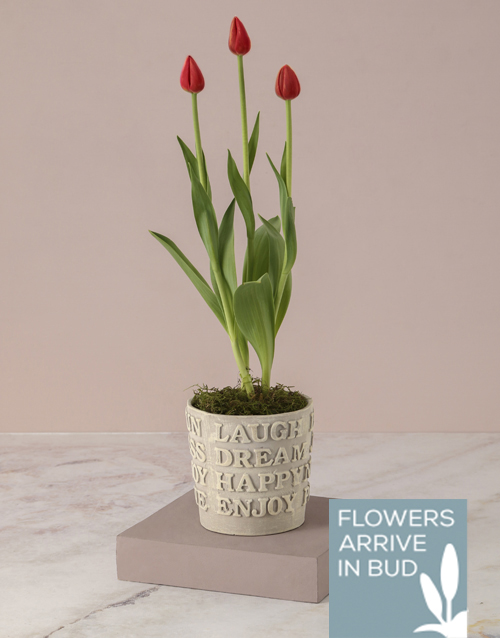 tulips: Tulips Of Positive Vibes!