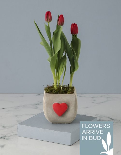 tulips: Hearts For Red Tulips!