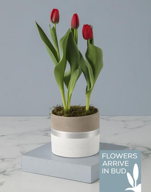 tulips: Rustic Tulip Pot Plant!