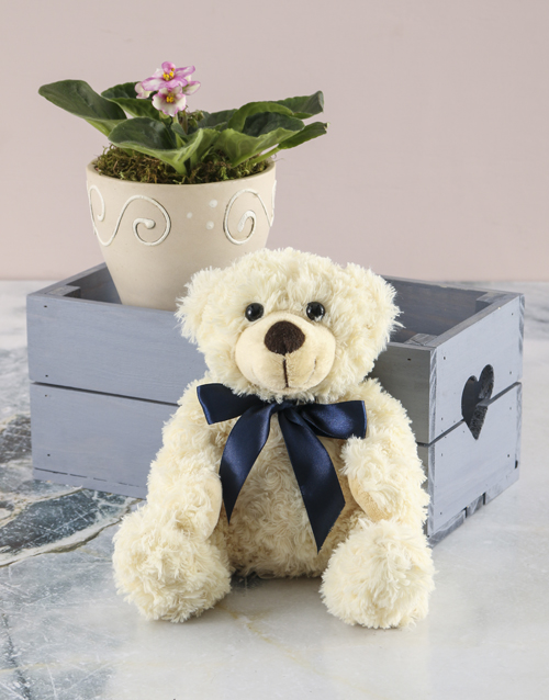 birthday: African Violet In Heart Crate Plush Combo!