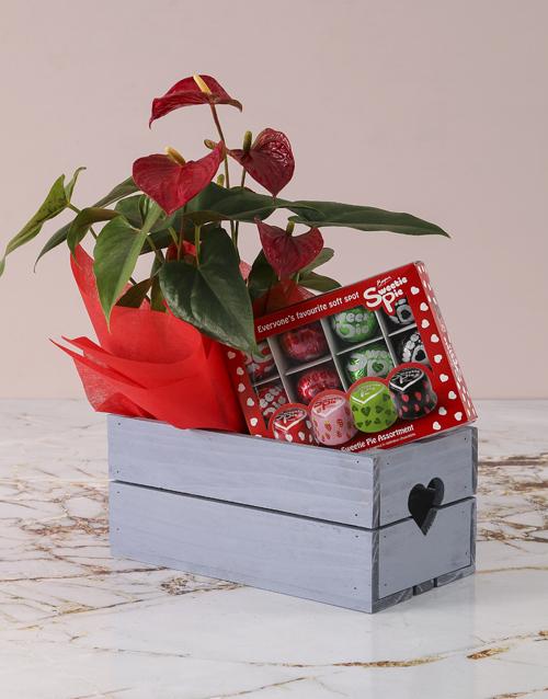 colour: Anthurium Sweetie Pie Hamper!