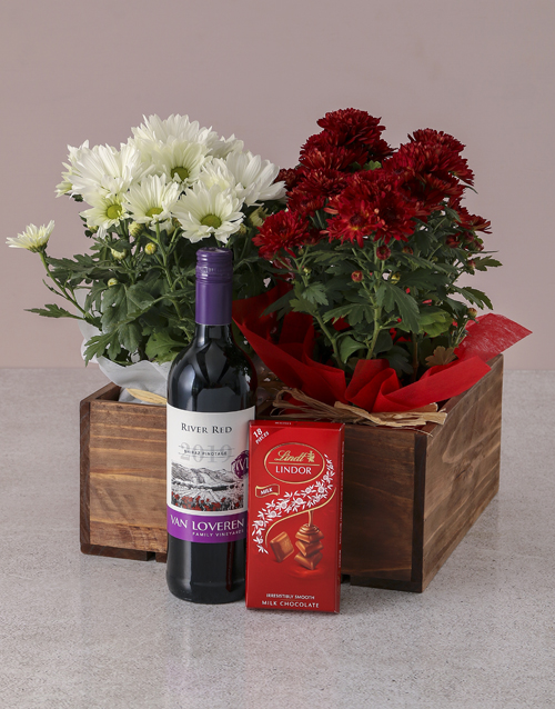 chrysanthemum: Red and White Chrysanthemum Gift Hamper!