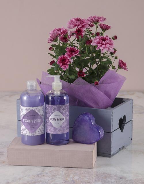 chrysanthemum: Purple Chrysanthemum Bath and Body Hamper!