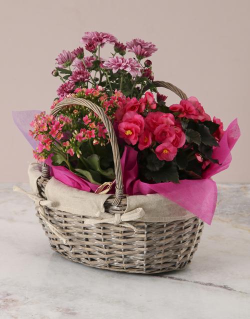 begonia: Pink Begonia Basket Arrangement!