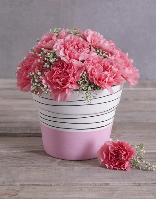 womens-day: Bubblegum Pink Carnation in a Pink Pot!