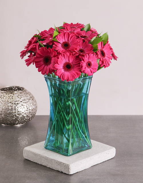 birthday: Cerise Gerbera Daisies in a Turquoise Vase!