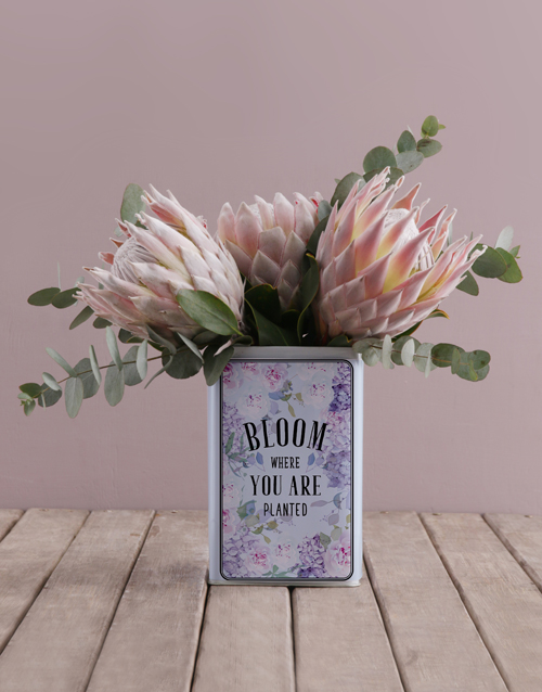 flowers: King Proteas in a Unique Tin!