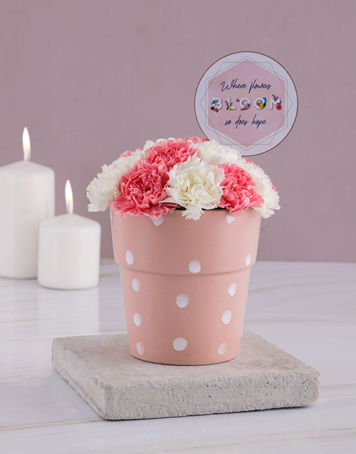 carnation: Flowers Bloom Carnations Pot!