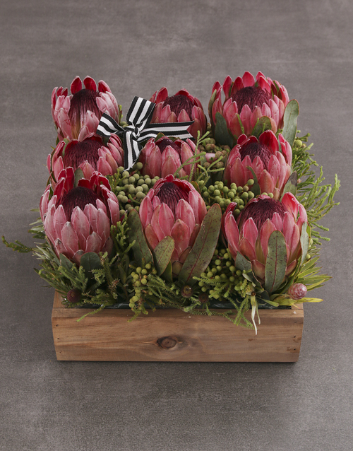 flowers: Pink Protea Blossoms!