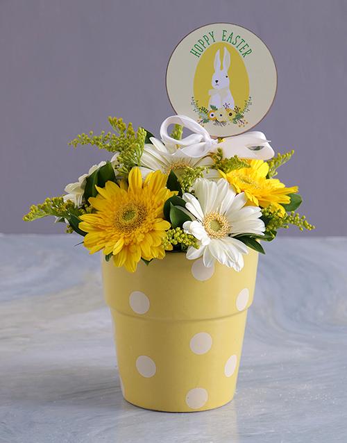 colour: Easter Sunshine Gerberas in Polka dot pot!