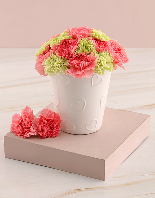 carnations: Pink and Green Carnation Pot!