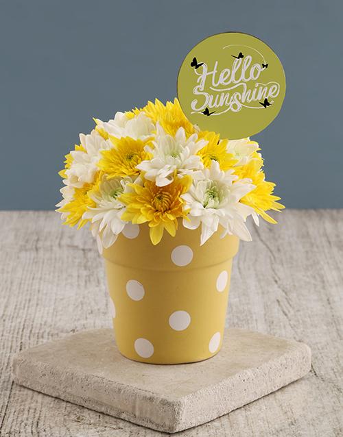 daisies: Hello Sunshine Sprays In Sunny Pot!