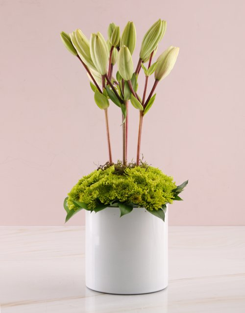 mixed: Topiary Tree White Lilies!
