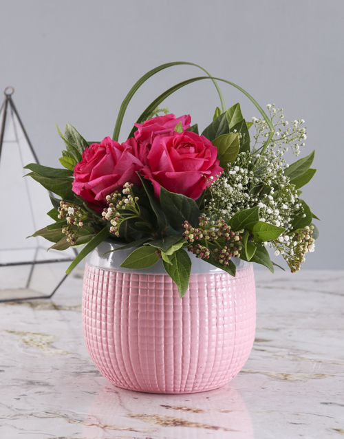 roses: Cerise Roses In Pink Pot!