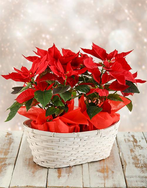 christmas: Double Poinsettia Basket!