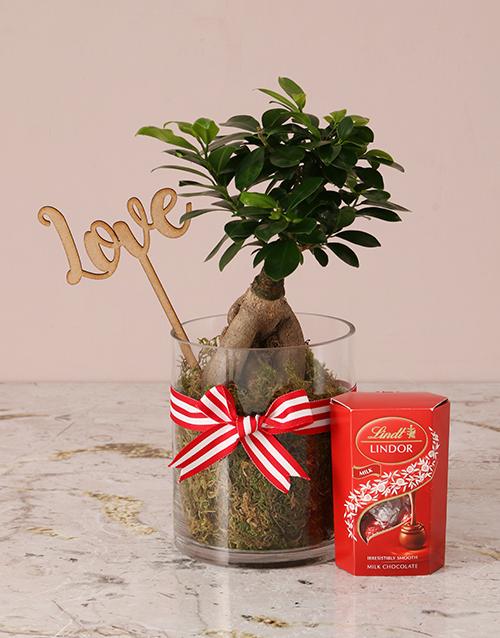 valentines-day: Red Romance Ficus Bonsai Tree!