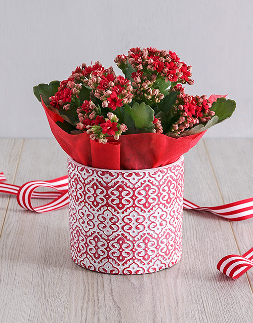 flowering: Red Kalanchoe In Embossed Cement Pot!