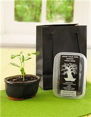 Picture of Grow Your Own Bonsai!