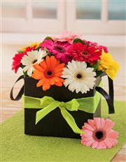 Picture of Mini Gerberas in a Box!