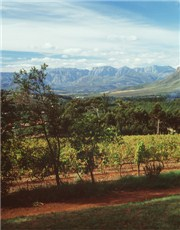 Winelands Country Tour!