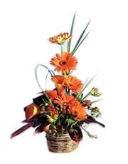Picture of Orange Bloom Display!