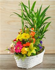 Picture of Plant with Flower Arrangement in Gift Basket!