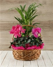 Picture of Basket of Indoor Plants!