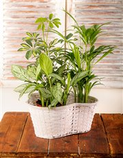 Picture of Trio of Green Plants in a Basket!